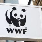 WWF-Turkiye-dijital-ajansini-secti-