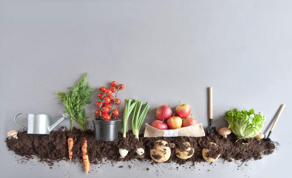 tarımda ürün ekme