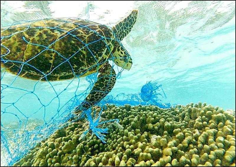 Plastik nedir| dünyada plastik