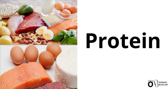Protein ve Mandıra Grubu