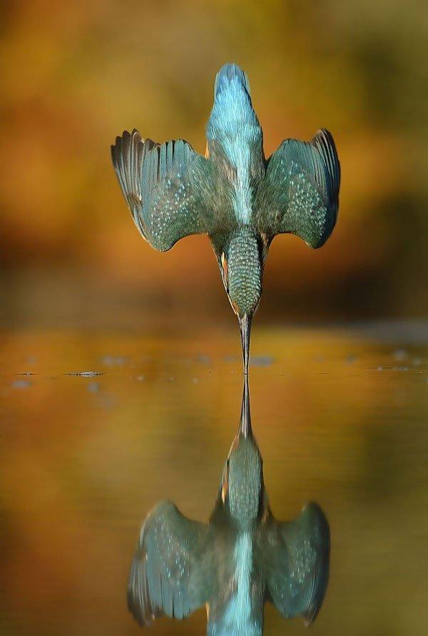 Yalı çapkını kuşu