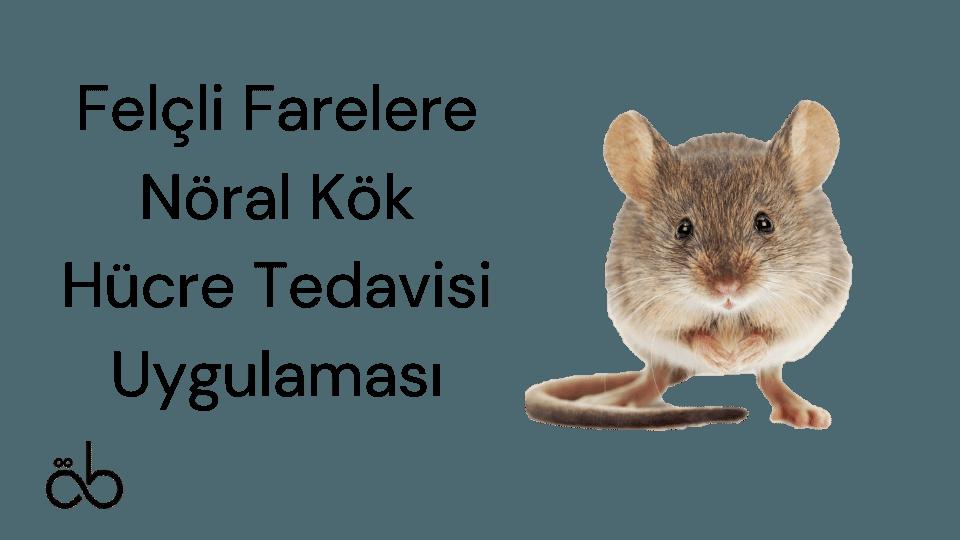 Felçli Farelere Nöral Kök Hücre Tedavisi Uygulaması